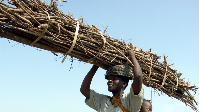 Malawi Deploys Military to Protect Its Fast-dwindling Forests