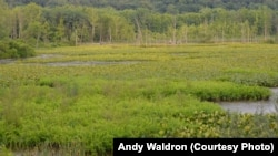 The National Park Service has documented over 1,500 wetlands at Cuyahoga Valley National Park.