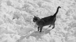 Quiz - The Black Cat