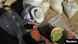 Campesinos salvadoreños limpian los granos de café en una cooperativa en las afueras de San Salvador.