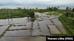 Bagian dari persawahan desa Toinasa, Kecamatan Pamona Barat yang terendam oleh luapan Danau Poso. Minggu, (15/11/2020). (Foto: VOA/Yoanes Litha)