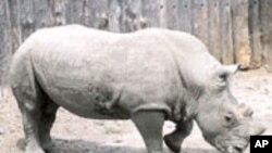 انگریزی سکھئیے: Poaching