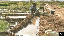 Moroccan community farm could be a model for other drought-prone regions