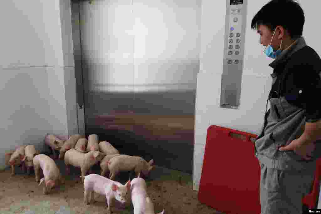 A worker waits for an elevator to transport young pigs out of Guangxi Yangxiang's high-rise pig farm, at Yaji Mountain Forest Park in Guangxi province, China.