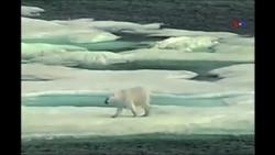 Arktikadakı neft rezervləri ABŞ və Rusiyanın diqqətindədir