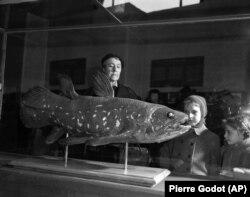 Ekspresi di wajah para pengunjung saat mereka melihat coelacanth yang dipamerkan di Natural History Museum di Paris pada 21 Maret 1954. Coelacanth adalah ikan langka. (Foto: AP/Pierre Godot)