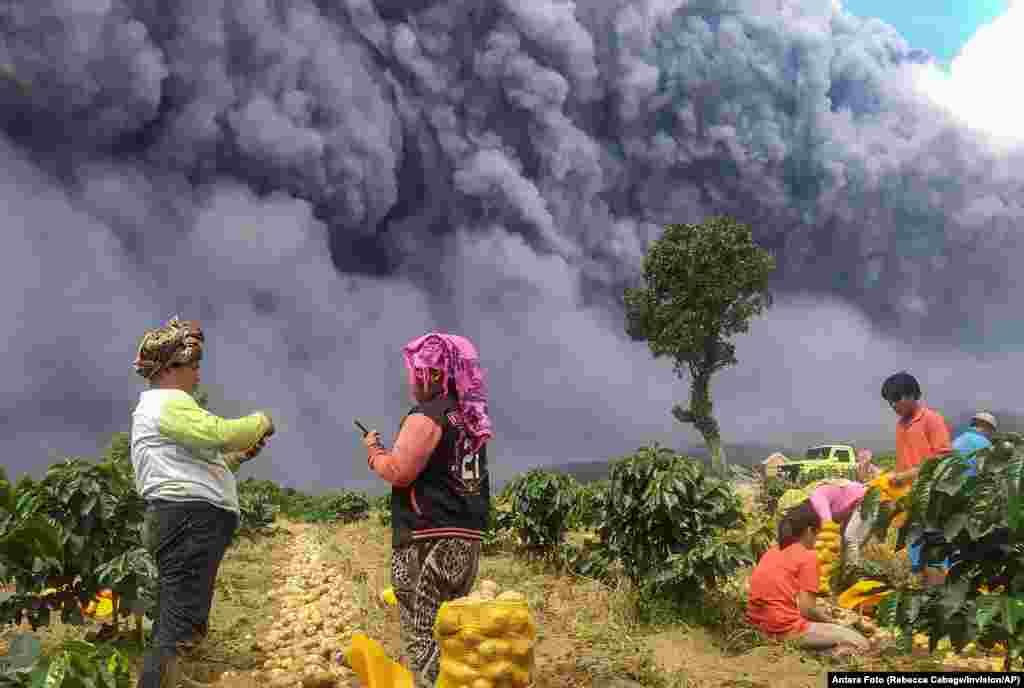កសិករប្រមូលផលដំឡូង ខណៈពេលភ្នំភ្លើង Sinabung បញ្ចេញផ្សេងនៅក្រុង Karo ខេត្ត North Sumatra ប្រទេសឥណ្ឌូណេស៊ី។