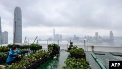 "Petani perkotaan ""Rooftop Republic"" memanen sayuran yang ditanam area pertanian di puncak menara Bank of America setinggi 150 meter di Hong Kong. (Anthony WALLACE / AFP)"