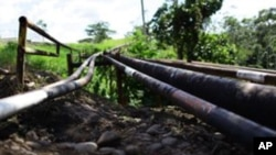 Oil pipes across the Ecuadorian jungle