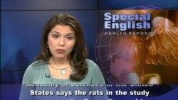 Scientists Criticize Study of GMO Corn and Rat Tumors