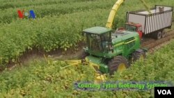 Julian Bobe dari perusahaan Tyton Bio Energy Systems, mengatakan ada kegunaan lain tembakau, contohnya untuk membuat etanol.