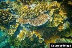 Onshore coral, Lady Elliot Island, Great Barrier Reef, Queensland, Australia, March 20, 2015, (Courtesy Image, DFAT / Patrick Hamilton).