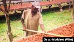 São Tomé, produção da cacau