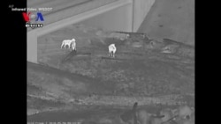 Wildlife Bridge to Reduce Car Collisions with Animals