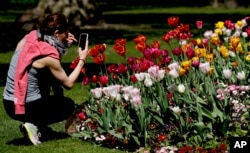 FILE - A woman takes photos of flowers in a park in London, April 22, 2020, as the lockdown in Britain continues due to the coronvirus pandemic.
