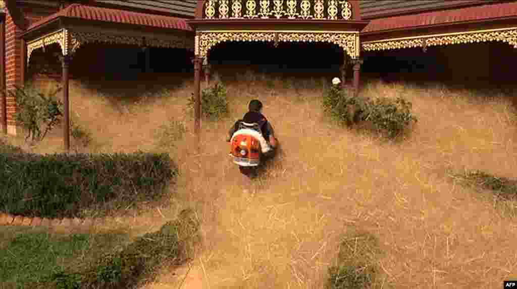 This frame grab from video released to AFP by Australian television's Channel 7 shows a man clearing fast-growing tumbleweed from a home in the town of Wangaratta, 250 kilometers (150 miles) northeast of Melbourne, Australia. This season has seen an unusual amount of hairy panic — known scientifically as Panicum effusum — with hundreds of thousands of the fuzzy, yellowish plants swamping the entrances of homes, driveways and backyards.