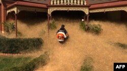 This frame grab from video released to AFP from Australian television's Channel 7 on February 18, 2016 shows a man clearing out fast-growing tumbleweed from a home in the town of Wangaratta, 250 kilometres (150 miles) northeast of Melbourne.
