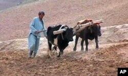 احضار اعضای کمیتۀ اضطرار به ولسی جرگۀ افغانستان