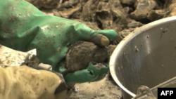 Industrija morske hrane trpi posledice izlivanja nafte
