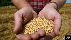 Un fermier de Buncenton, dans l'Etat Minnesota, montrant ses semences de soja (Archives)