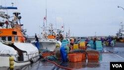 外國人技能實習生現在是日本漁業現場不可缺少的勞力 (歌籃 拍攝)
