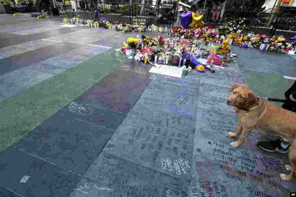هزاران هوادار «کوبی برایانت» بازیکن مشهور بسکتبال آمریکا بعد از مرگ ناگهانی او، به یادش جمع شدند. برایانت در طول بازیگری پنج بار قهرمان ان بی ای شد.