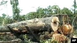 美国豁免印尼债务换取保护苏门答腊岛森林