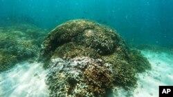 Des récifs coralliens au large de l'île d'Oahu, à Hawaï, le 26 octobre 2015.