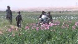 طالبان و مواد مخدر در جوزجان
