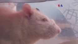 Alternativa para pruebas clínicas con animales