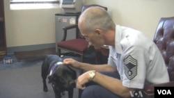一隻幫助退伍軍人的解壓犬。