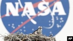 A female Osprey and one of her three chicks are seen against the backdrop of the NASA logo on the Vehicle Assembly Building at the Kennedy Space Center, Saturday, April 3, 2010, in Cape Canaveral, Fla. Space Shuttle Discovery is scheduled to launch Monday