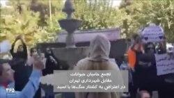 تصاویری دیگر از تجمع اعتراضی به کشتار سگها با اسید مقابل شهرداری تهران
