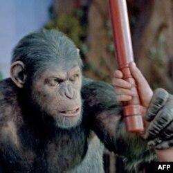 Prkosni Cezar čini prvi korak ka dogadjajima koji će dovesti do dominacije majmuna.