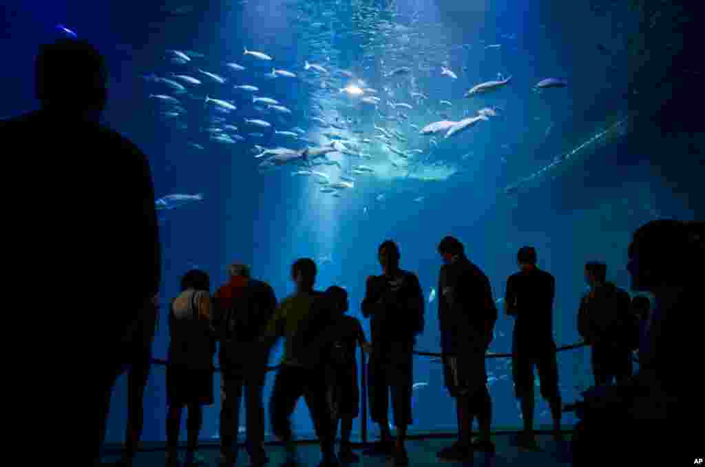Vacationers enjoy their visit to the 'Ozeanum' aquarium and museum at the Baltic Sea port of Stralsund, Germany.