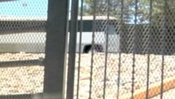 Cientos de niños hacinados en centro de atención inmigratorio en Arizona