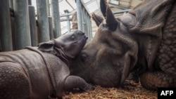Un Kenyan extradé vers les États-Unis pour trafic présumé de cornes de rhinocéros