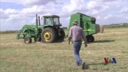 持续干旱困扰俄克拉荷马农民