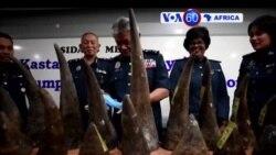 Manchetes Africanas 10 Abril 2017: Malásia apreende cornos de riso idos de Moçambique
