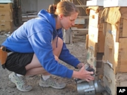 Sgt. Jo Lisa Ashley tends to the bees of Bagram in Afghanistan.