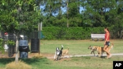 There's lots of room for romping - for both mutts and their mistresses and masters - at this bark park in Mecca, Florida.