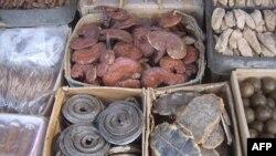 Một vài loại động vật và quả khô dùng trong thuốc tàu