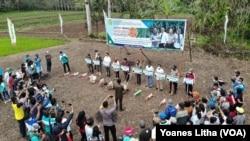 Kegiatan gerakan tanam jagung komposit oleh BPTP Sulawesi Tengah di lahan percontohan seluas satu hektare di desa Tingkeao, Morowali Utara, Sulawesi Tengah. Jumat (23/4/2021). (Foto: VOA/Yoanes Litha)