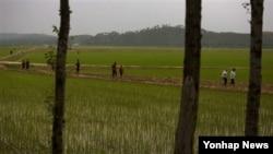 올해 6월 평양 외곽 지역의 농촌 풍경. (자료사진)