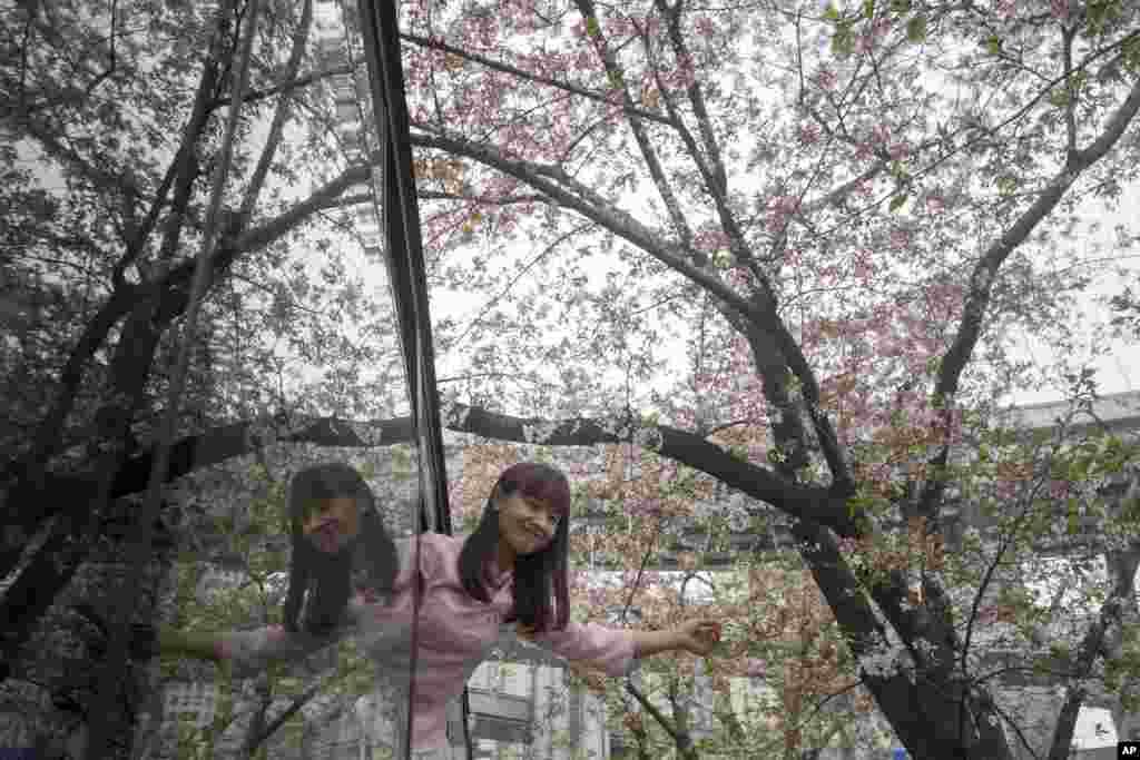 2018年3月30日,在上海的一个公共汽车站,樱花树下,一位女孩在公共汽车上探出身来拍照。
