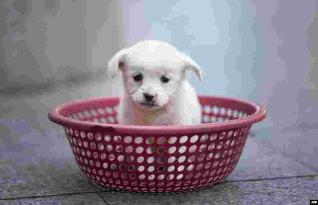 A puppy sits in a plastic strainer, waiting to be sold by its owner, in front of a subway station in downtown Shanghai, China.