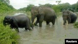 ہاتھیوں کا ایک گروپ ایک ندی عبور کر رہا ہے۔