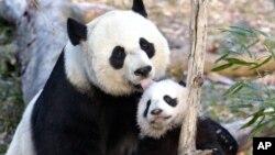 남북대학생들의 워싱턴 동물원 나들이