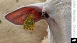 美国推动建立全国牲畜跟踪系统