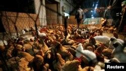 Chợ gà trong tỉnh Hồ Bắc, Trung Quốc